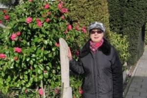цветет камелия в феврале
