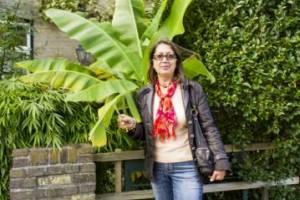 Вот так ростуть бананы на вулицях Голландii