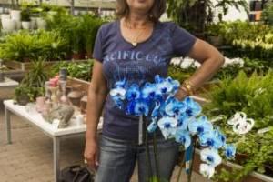 голуба орхидея