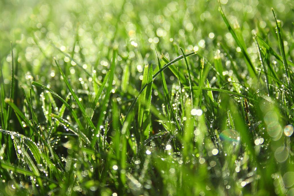 Роса на листку, ходити по росі